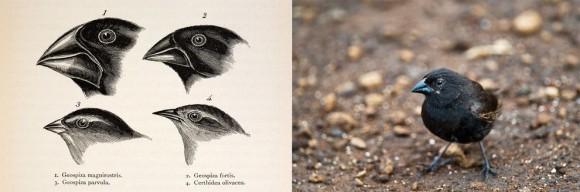 ダーウィンの進化論(種の起源・自然選択説・自然淘汰説)_03