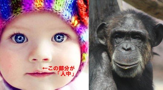 ヒトの祖先はサルではなくカッパだった?水生類人猿説・アクア説_03